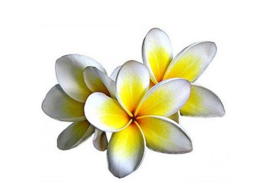 Afrodisiaque Monoi De Tahiti
